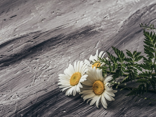 Natural summer flowers on grey background.