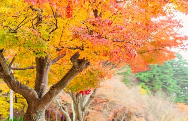 自然の日差し茶色の秋の風景