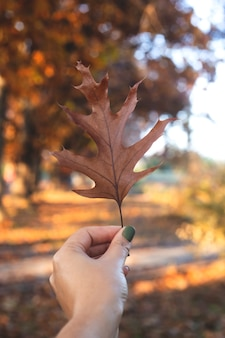 Natural textural autumn leaf in fe,ale hand. background or seasonal wallpaper.