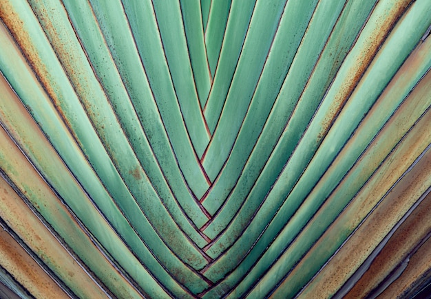 Natural texture background, striped of palm leaf.