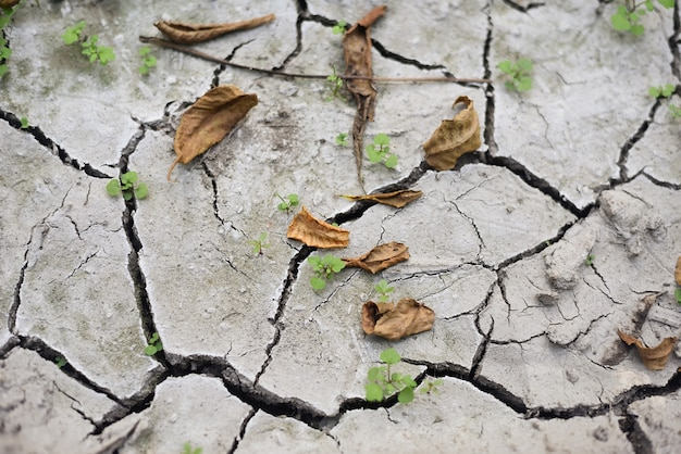 Natural texture of dry earth with abstract cracks, concept of lack of water, global problem.