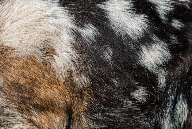 Натуральная текстура козьей кожи коричневого цвета с пятнами.