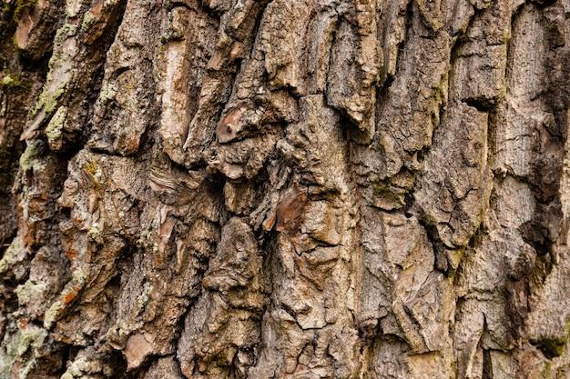 赤樫の木の樹皮の自然な風合い。