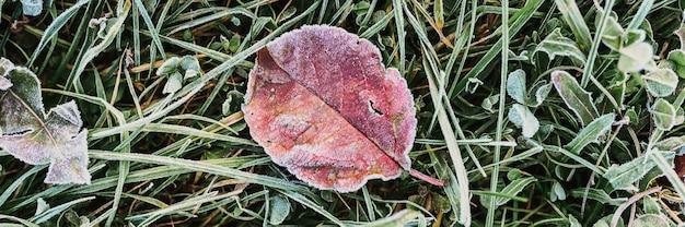 Естественный текстурированный фон с одним упавшим красным оранжевым яблоком уродливым листом в зеленой траве с белыми холодными кристаллами мороза морозным ранним осенним утром. вид сверху. знамя