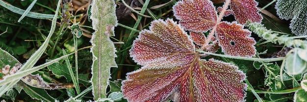 Естественный текстурированный фон с одним упавшим красным оранжевым уродливым листом в зеленой траве с белыми холодными кристаллами мороза морозным ранним осенним утром. вид сверху. знамя