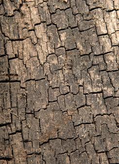 자연 질감 오래 된 나무 그런 지 나무 배경