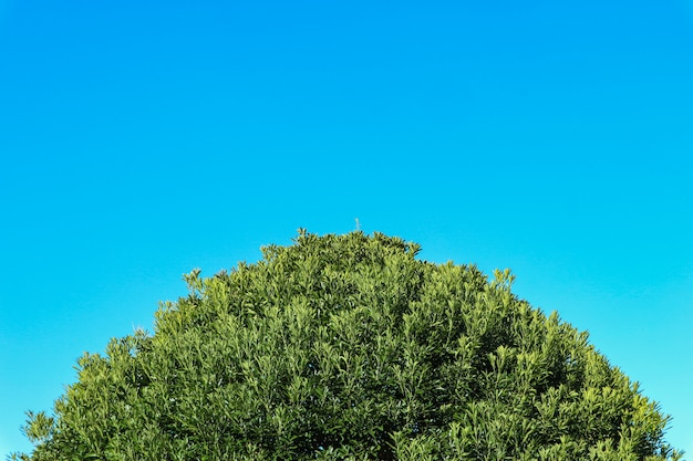 Natural top part of green leaves tree with blue sky copy space background.