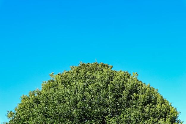 녹색의 자연 상단 부분 푸른 하늘 복사 공간 배경으로 나무를 떠난다.