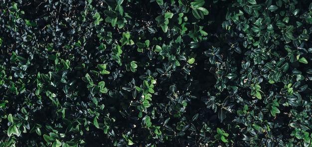 Естественный тропический фон природа лес джунгли листва