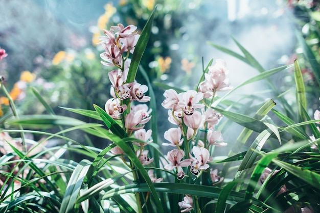 Естественный тропический фон с листьями и цветами