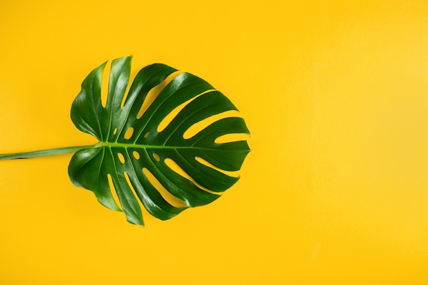 Natural tropical palm leaf on vibrant yellow minimal background with empty space
