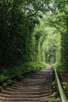 Natural tunnel of love emerging from the trees