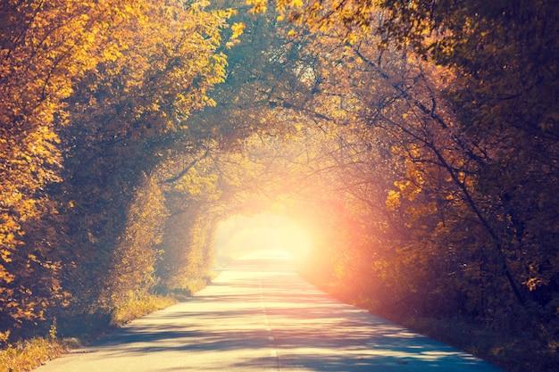 秋の木の自然のトンネル