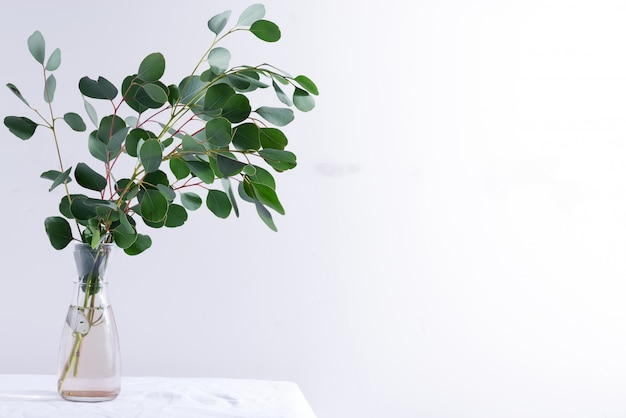 Natural twig of fresh evergreen eucalyptus plant in a ceramic mug on a table covered textile cloth against light grey wall.