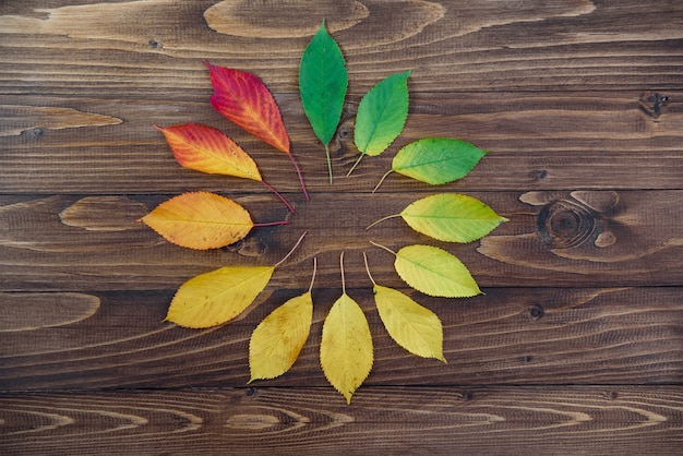 Natural watch from autumn leaves. clock concept. autumn leaves transition from green to red on wooden background