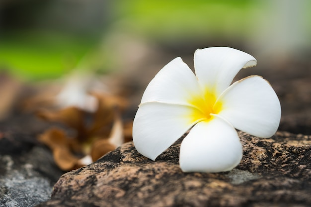 Natural white flower on ground using as a background