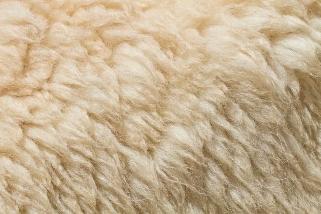 Natural white wool goat