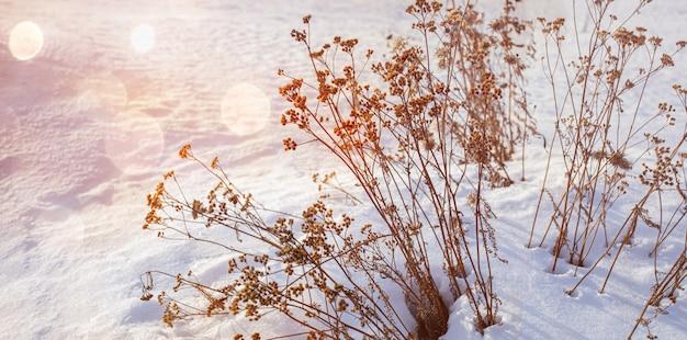 自然な冬の美しいシーン。ボケと日没の乾いた草と冬の風景。寒波。冬の季節。
