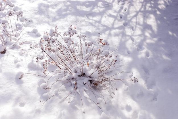 自然な冬のシーン。乾いた草の茂みと流行の透かし彫りの影のあるフィールドの冬の風景。
