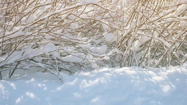 自然な冬のシーン。雪に覆われた木の低木の枝と澄んだ冬の日に影のある新鮮な雪のふわふわの雪の吹きだまりのある冬の風景。