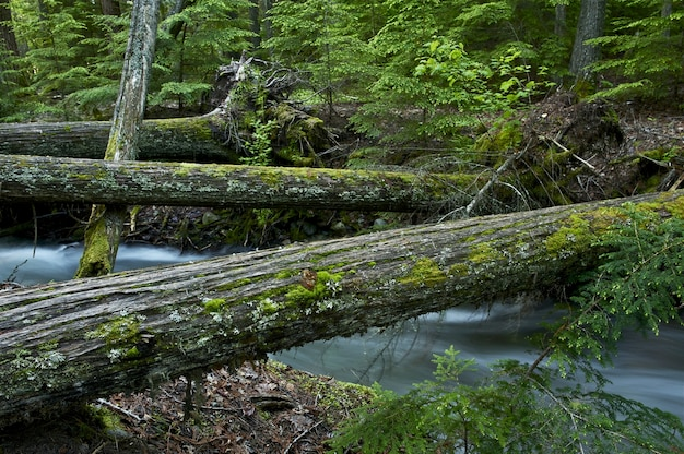 Natural wood bridges
