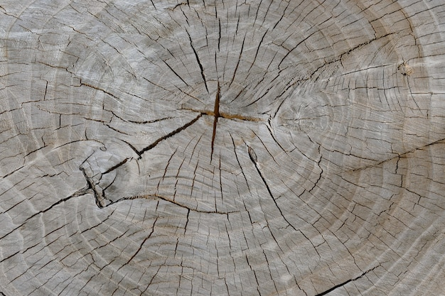 천연 나무 질감 배경