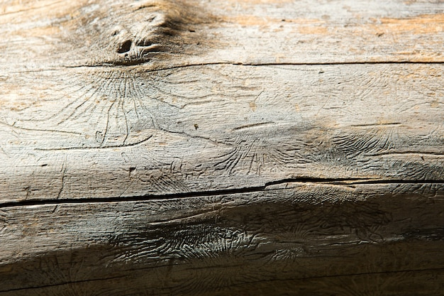 Natural wood texture with lines drawn by a bark beetle in the shape of spiders. background, bark beetle, tree trunk