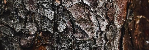 나무 배경 환경 및 자연 근접 촬영으로 천연 나무 나무 질감