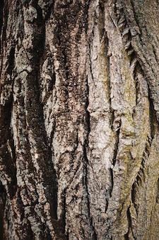 天然木テクスチャ自然クローズアップ