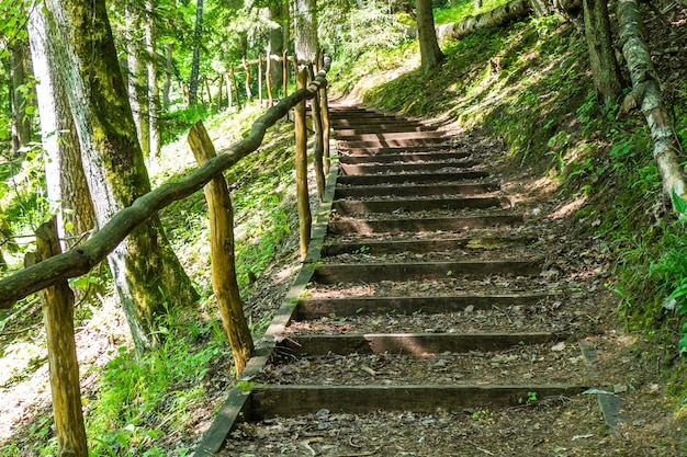Natural wooden stairs complimented by gravel among the trees