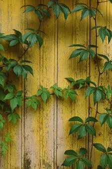 Текстура натурального дерева, старая выветрившаяся стена с желтой краской
