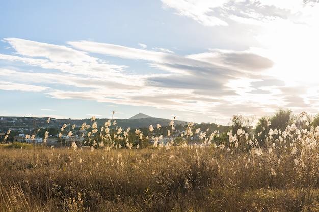 자연과 풍경 개념-노란색 가을 초원