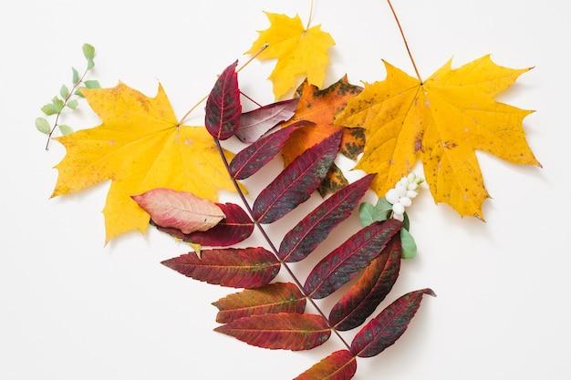 자연 가을 노란색과 빨간색의 창조적 배열은 흰색 표면 위에 나뭇잎