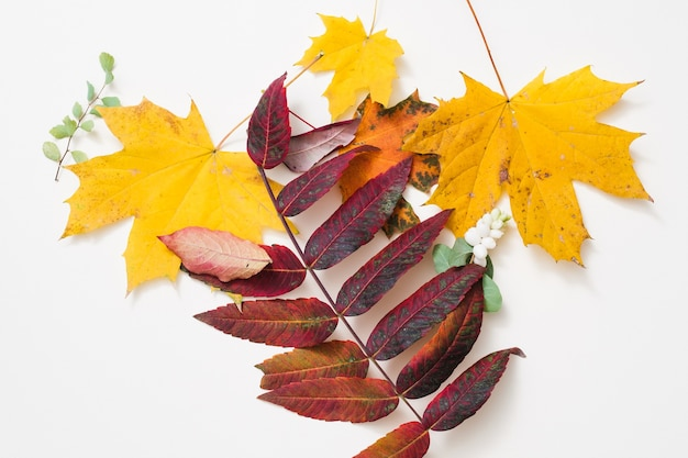 Nature  autumn creative arrangement of yellow and red leaves over white surface