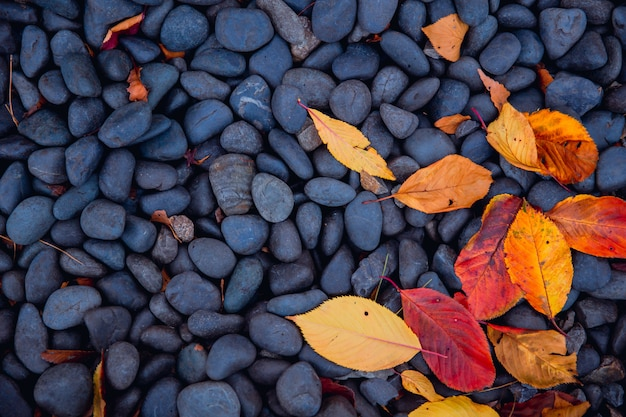 Nature autumn season leaf drop on black pebbles stone cool chill natural background