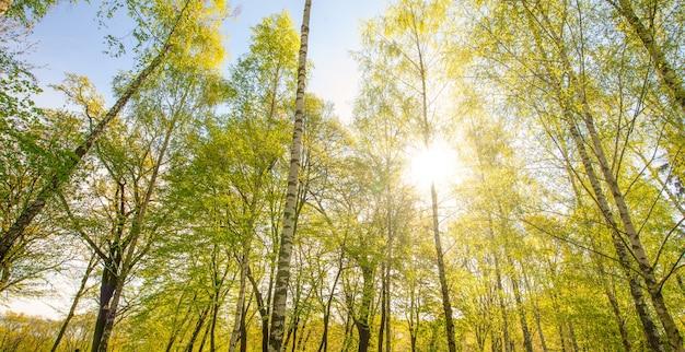 자연 배경, 숲