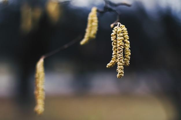 植物園の早春または秋の寒さの自然の背景