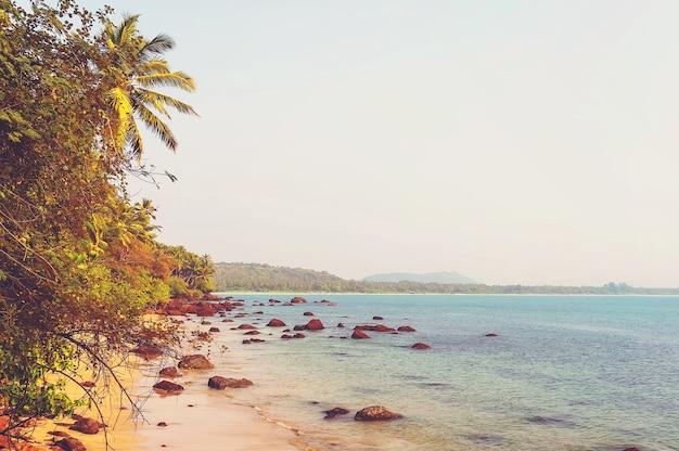 ヴィンテージスタイルの自然の背景。ヤシの木のある海岸線。調色