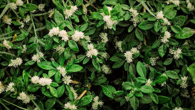 Природа фон красивого растения с белым цветком