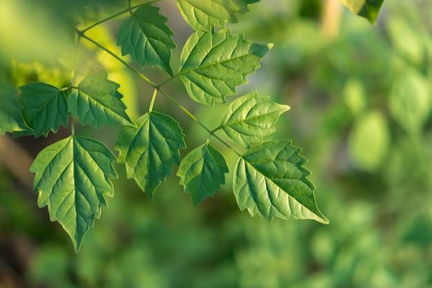 道路脇に生えている緑の葉の自然背景。