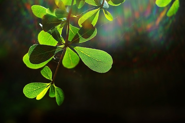 Nature background of spring foliage in the morning with sun ray spectrum.