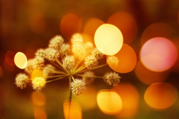 Природа фон с боке огни