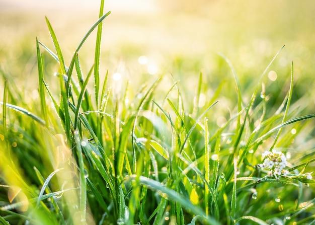 Природа фон с зеленой травой на закате Premium Фотографии