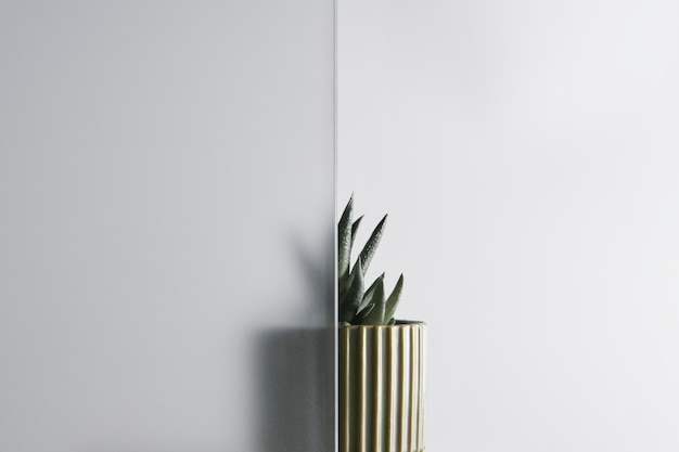 Природа фон с листом за узорчатым стеклом