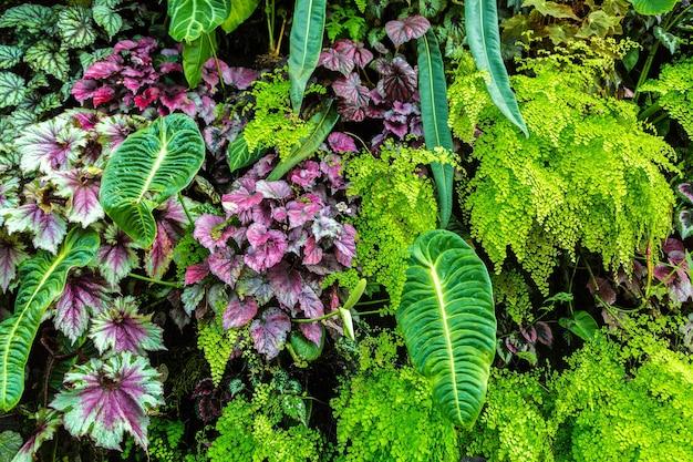 Природа фон с тропическими зелеными листьями