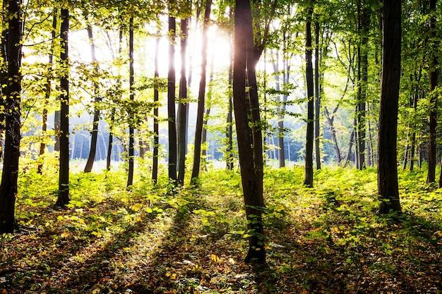 自然。森の中の美しい秋の朝