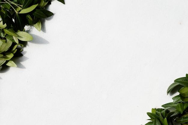 Природа, ботаника и растения. зеленые листья барвинка на белом фоне. концепция copyspace