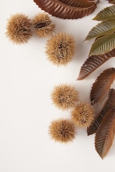 Nature chestnuts delicious sweet autumn