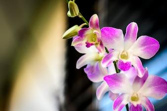 自然の接写咲く蘭の花