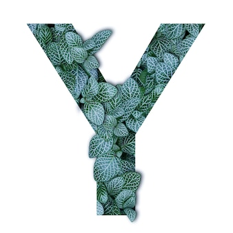 Nature concept alphabet of green leaves in alphabet letter y shapes
